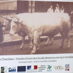La Charolaise - La Charolaise s'expose au Petit Louvre (La Pacaudière)