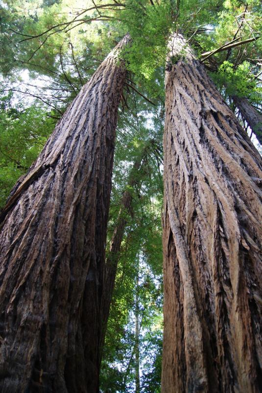 Les arbres (expo petit louvre)